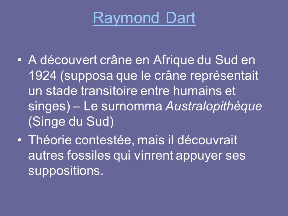 Raymond Dart A découvert crâne en Afrique du Sud en 1924 (supposa que le crâne représentait un stade transitoire entre humains et singes) – Le surnomm