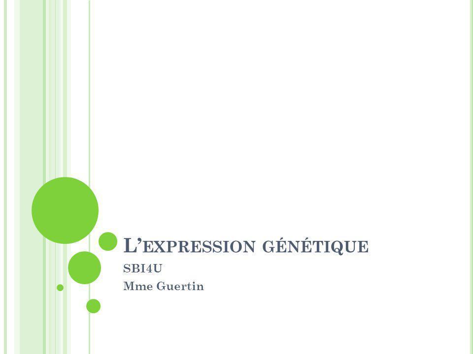 L' EXPRESSION DES GÈNES FAIT CHANGER LE PHÉNOTYPE Polypeptides sont les pigments qui donnent la couleur au pelage.