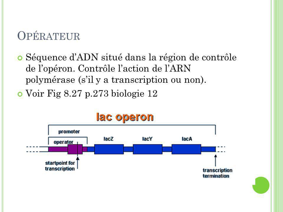 O PÉRATEUR Séquence d'ADN situé dans la région de contrôle de l'opéron.