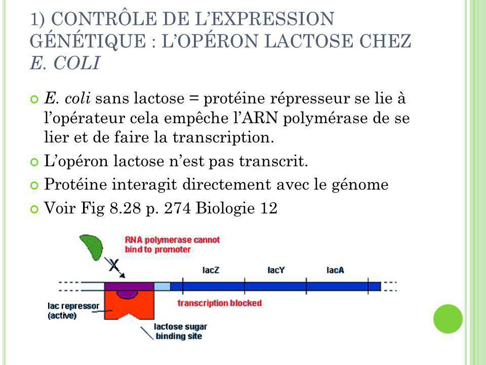 1) CONTRÔLE DE L'EXPRESSION GÉNÉTIQUE : L'OPÉRON LACTOSE CHEZ E.