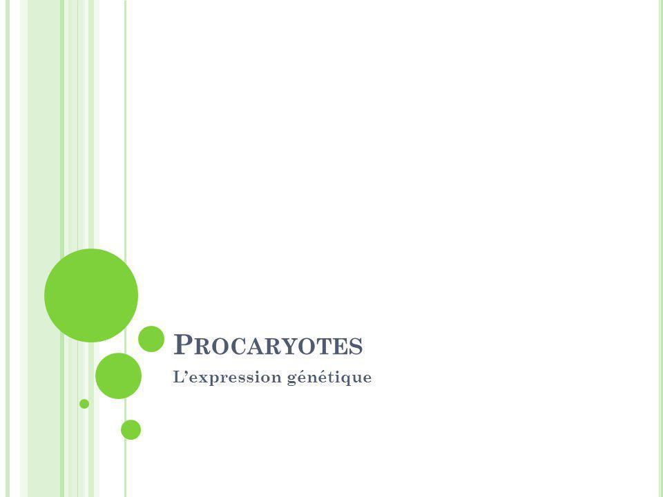 P ROCARYOTES L'expression génétique