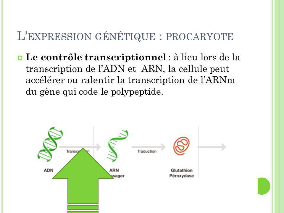 L' EXPRESSION GÉNÉTIQUE : PROCARYOTE Le contrôle transcriptionnel : à lieu lors de la transcription de l'ADN et ARN, la cellule peut accélérer ou ralentir la transcription de l'ARNm du gène qui code le polypeptide.
