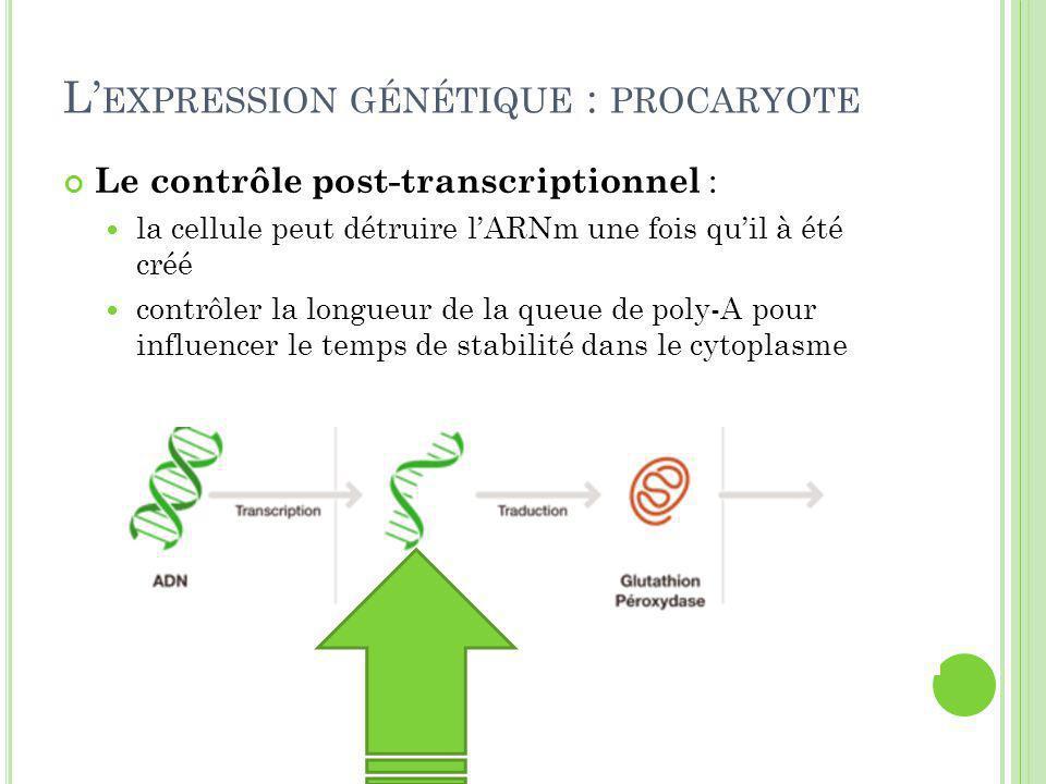 L' EXPRESSION GÉNÉTIQUE : PROCARYOTE Le contrôle post-transcriptionnel : la cellule peut détruire l'ARNm une fois qu'il à été créé contrôler la longueur de la queue de poly-A pour influencer le temps de stabilité dans le cytoplasme