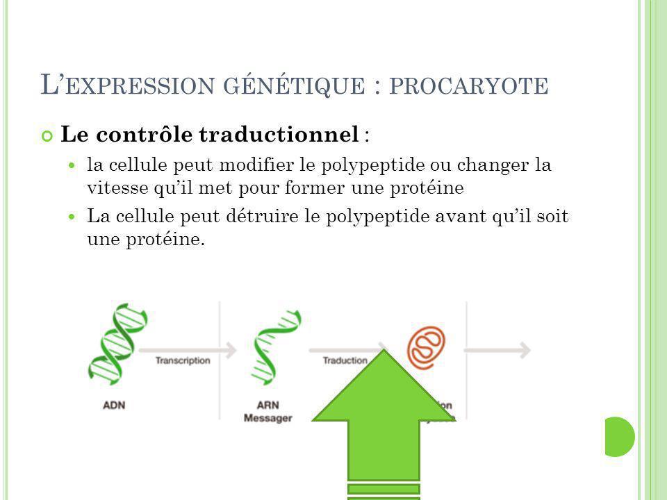 P LUS EFFICACE CHEZ LES PROCARYOTES Plus c'est au début de la synthèse des protéines, plus ça économise l'énergie et les ressources de la cellule.