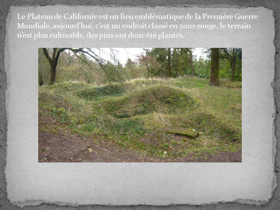 Le Plateau de Californie est un lieu emblématique de la Première Guerre Mondiale, aujourd'hui, c'est un endroit classé en zone rouge, le terrain n'est plus cultivable, des pins ont donc été plantés.