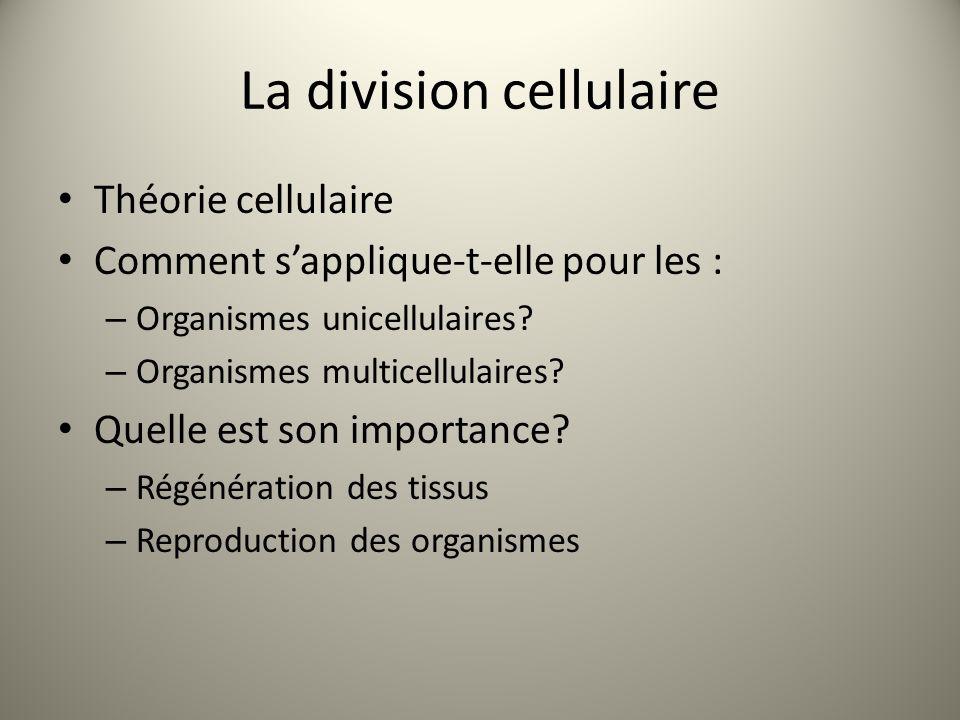 La division cellulaire Théorie cellulaire Comment s'applique-t-elle pour les : – Organismes unicellulaires? – Organismes multicellulaires? Quelle est