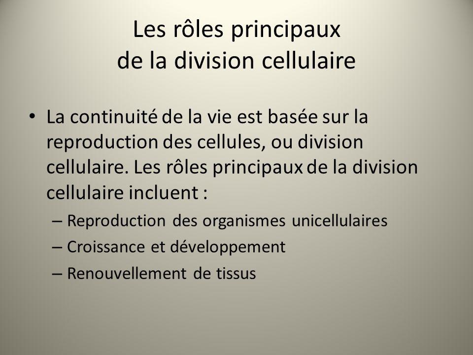 Les rôles principaux de la division cellulaire La continuité de la vie est basée sur la reproduction des cellules, ou division cellulaire. Les rôles p