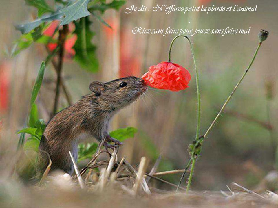 Je dis : N'effarez point la plante et l'animal ; Riez sans faire peur, jouez sans faire mal.