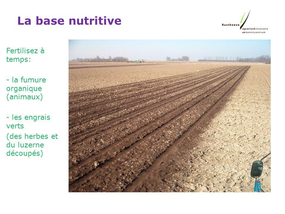 La base nutritive Fertilisez à temps: - la fumure organique (animaux) - les engrais verts (des herbes et du luzerne découpés)