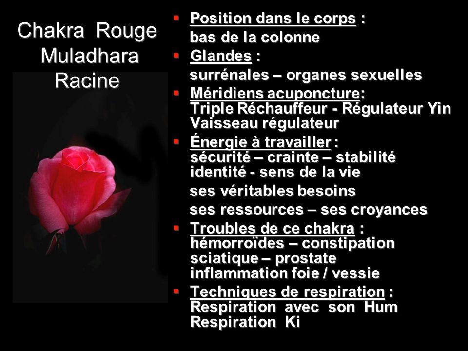Chakra Rouge Muladhara Racine  Position dans le corps : bas de la colonne bas de la colonne  Glandes : surrénales – organes sexuelles surrénales – o