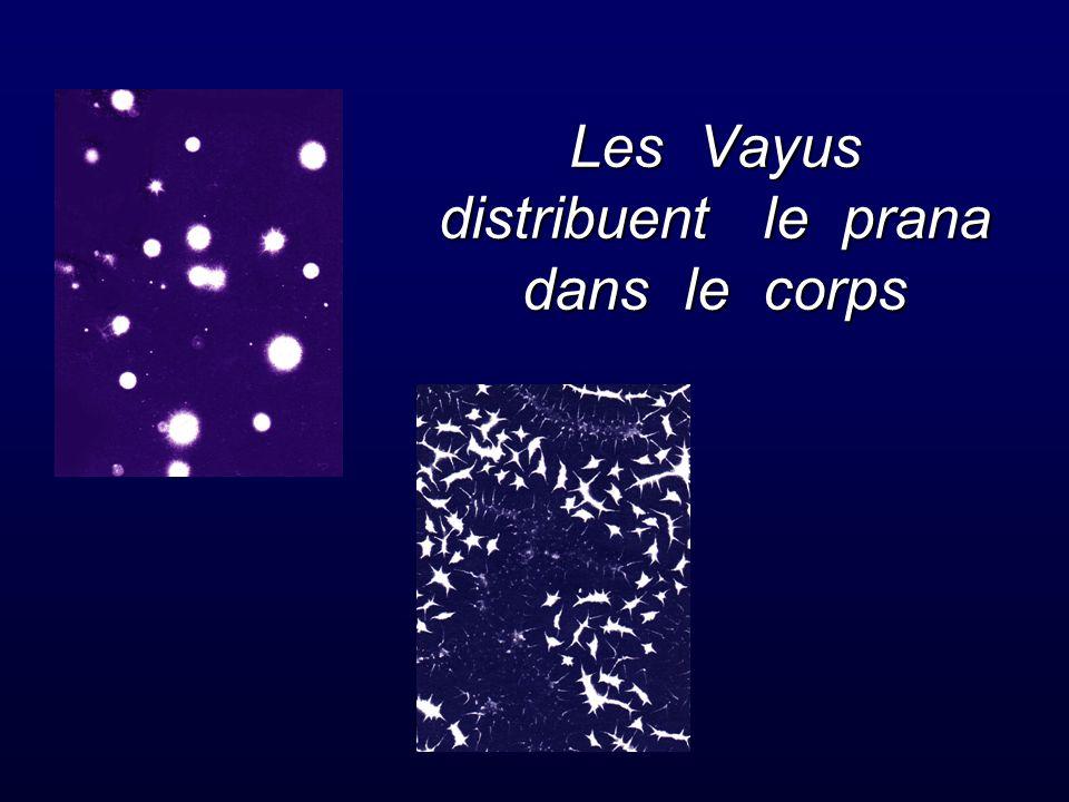 Les Vayus distribuent le prana dans le corps