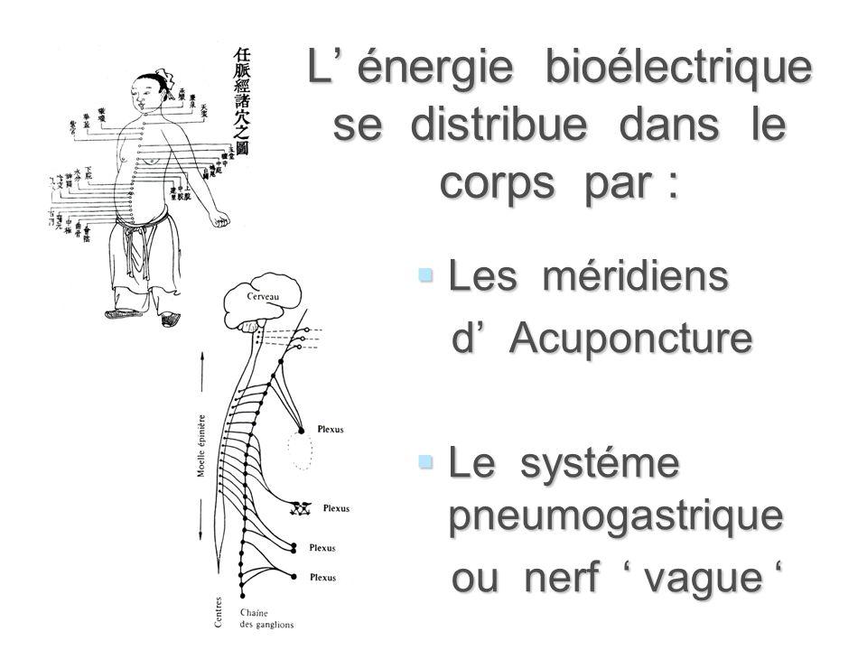 L' énergie bioélectrique se distribue dans le corps par : LLLLes méridiens d' Acuponcture LLLLe systéme pneumogastrique ou nerf ' vague '