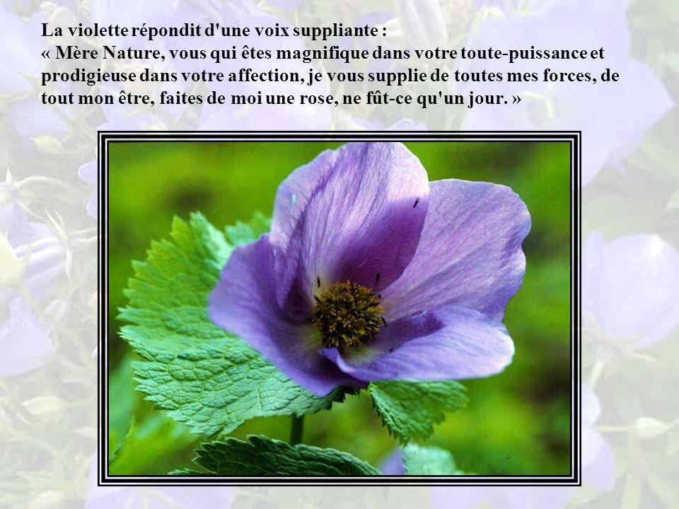 La Nature entendit la conversation de la rose et de la violette, elle frissonna, perplexe, puis dit d une voix forte : « Ô violette, qu est-ce qui te prend, ma fille .