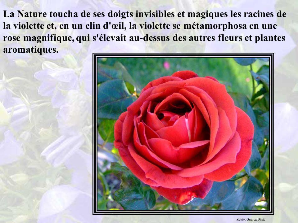 La Nature dit : «Ton vœu sera exaucé, ô ignorante et rebelle violette.