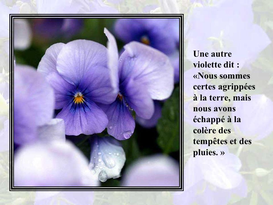 Une jeune violette leva la tête et, voyant ce qui était arrivé aux fleurs et aux arbres, elle sourit et interpella ses compagnes : « Regardez ce que la tempête a fait aux fleurs orgueilleuses et outrecuidantes.