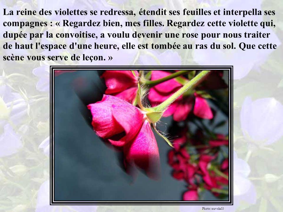 La reine des violettes constata que la rose qui hier encore était une violette avait été arrachée et ses feuilles dispersées par le vent, elle gisait sur le sol, tel un cadavre terrassé par une flèche ennemie.