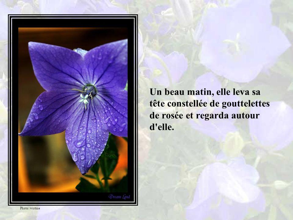 Dans un jardin isolé vivait une violette aux pétales et au parfum subtils qui, satisfaite de sa vie parmi les siennes, ondoyait allégrement au milieu des brins d herbes.