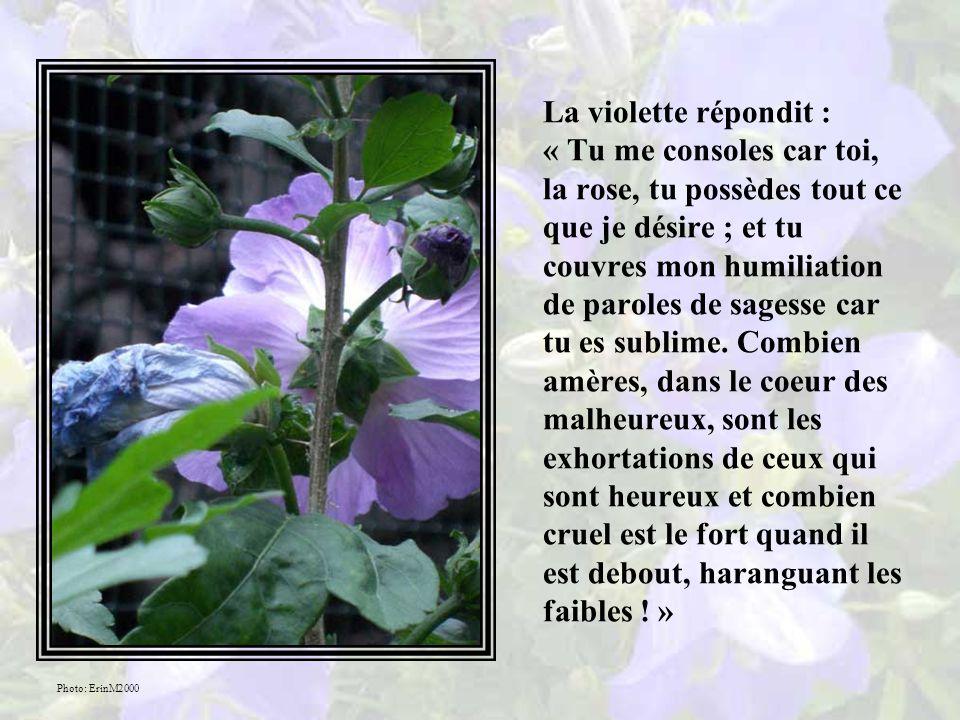 La rose entendit ce que disait sa voisine, la violette, elle frétilla en riant puis elle dit : « Que tu es stupide parmi les fleurs .