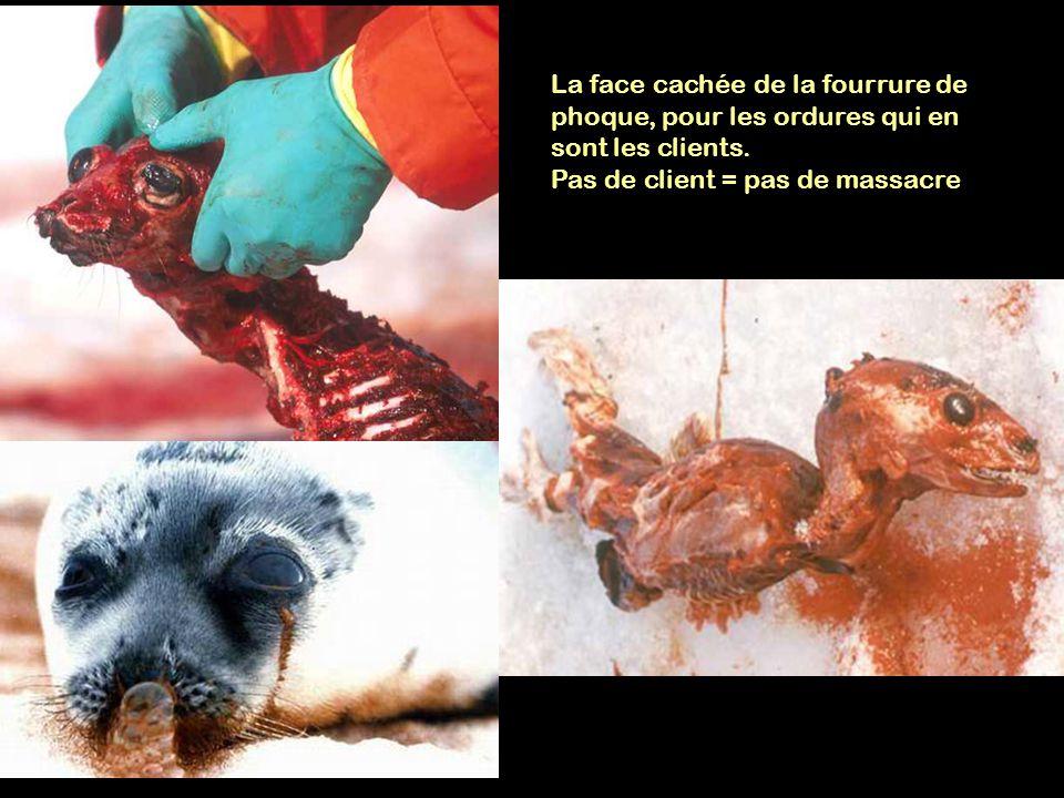 La face cachée de la fourrure de phoque, pour les ordures qui en sont les clients. Pas de client = pas de massacre