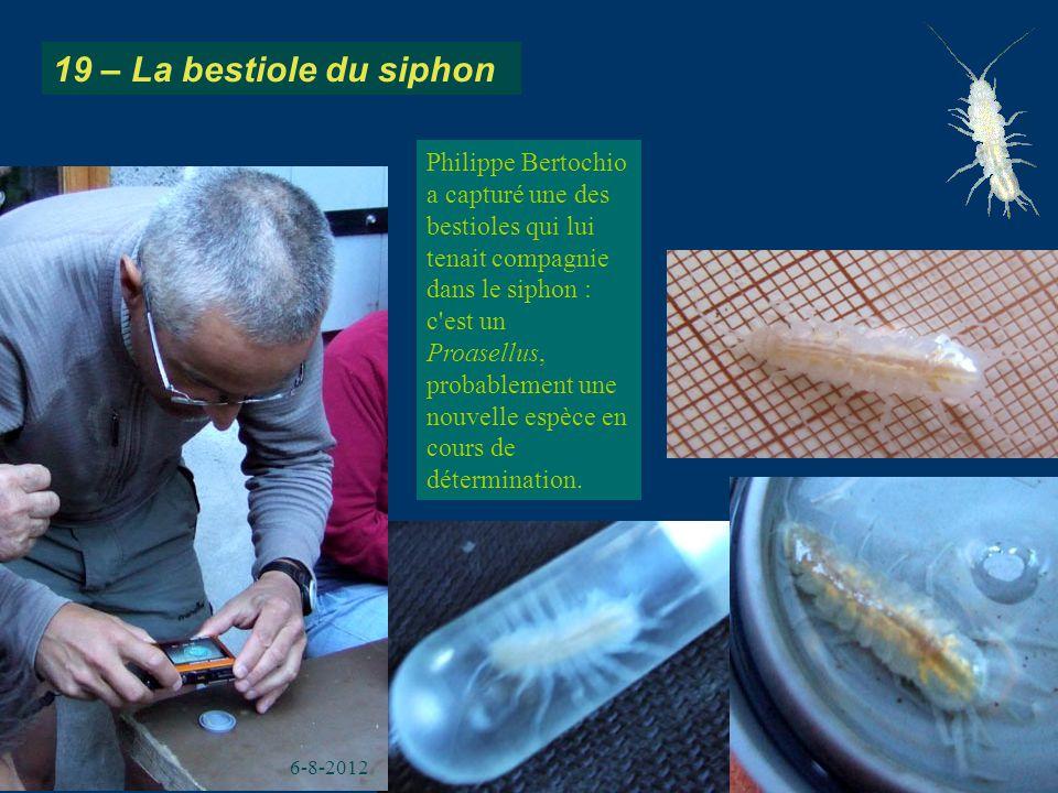 19 – La bestiole du siphon Philippe Bertochio a capturé une des bestioles qui lui tenait compagnie dans le siphon : c'est un Proasellus, probablement