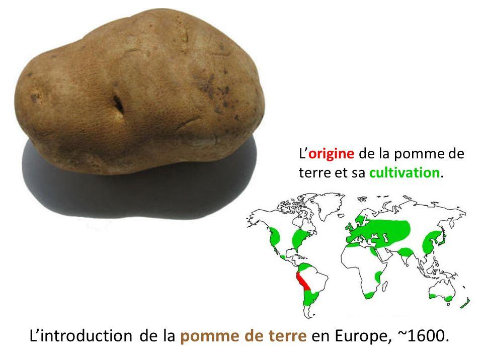 L'introduction de la pomme de terre en Europe, ~1600. L'origine de la pomme de terre et sa cultivation.