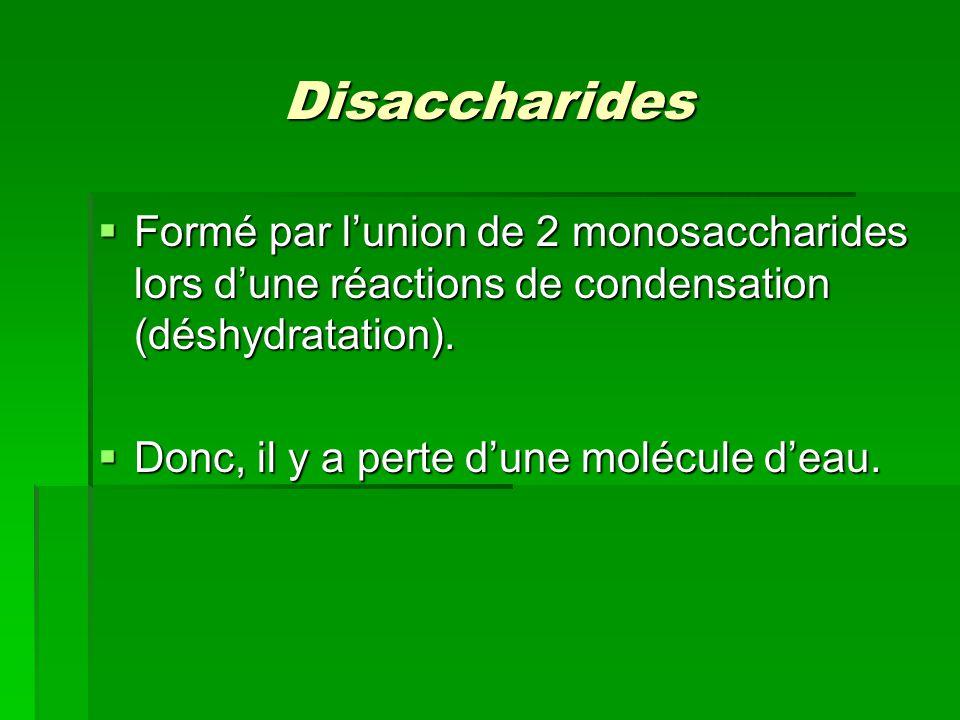 Disaccharides  Formé par l'union de 2 monosaccharides lors d'une réactions de condensation (déshydratation).  Donc, il y a perte d'une molécule d'ea