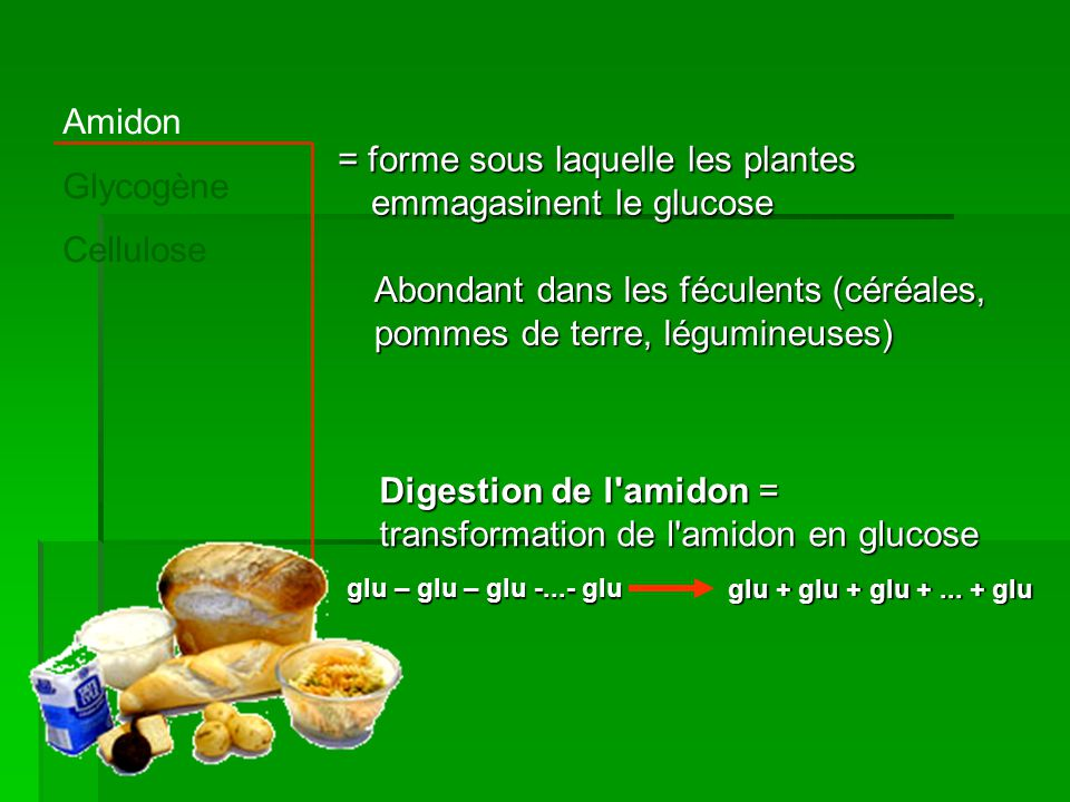 Amidon Glycogène Cellulose = forme sous laquelle les plantes emmagasinent le glucose Abondant dans les féculents (céréales, pommes de terre, légumineu