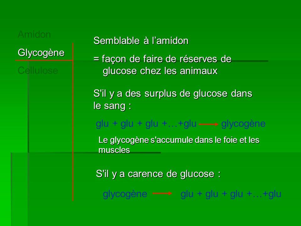AmidonGlycogène Cellulose Semblable à l'amidon = façon de faire de réserves de glucose chez les animaux S il y a carence de glucose : glycogèneglu + glu + glu +…+glu S il y a des surplus de glucose dans le sang : glu + glu + glu +…+gluglycogène Le glycogène s accumule dans le foie et les muscles