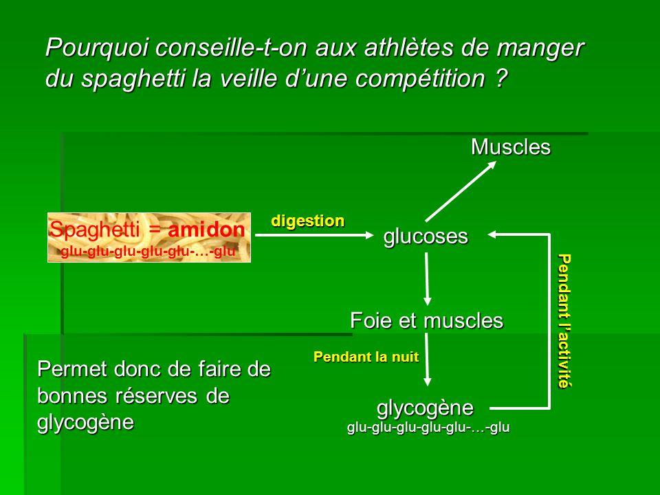 Pourquoi conseille-t-on aux athlètes de manger du spaghetti la veille d'une compétition ? Spaghetti = amidon glucoses Foie et muscles glycogène digest