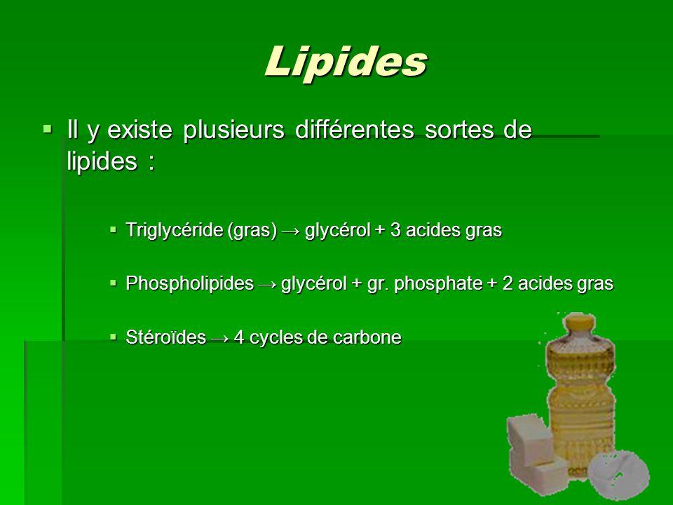 Lipides  Il y existe plusieurs différentes sortes de lipides :  Triglycéride (gras) → glycérol + 3 acides gras  Phospholipides → glycérol + gr.