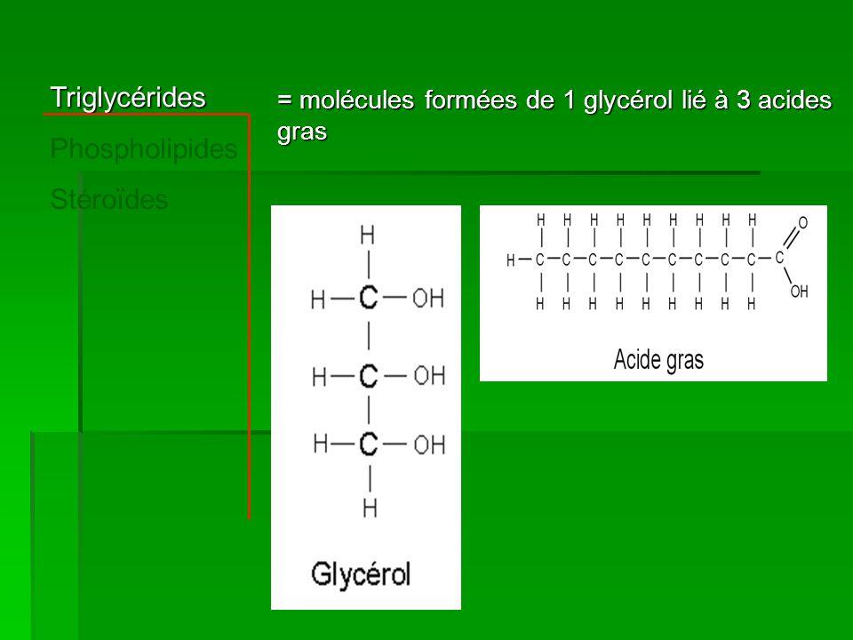 Triglycérides Phospholipides Stéroïdes = molécules formées de 1 glycérol lié à 3 acides gras