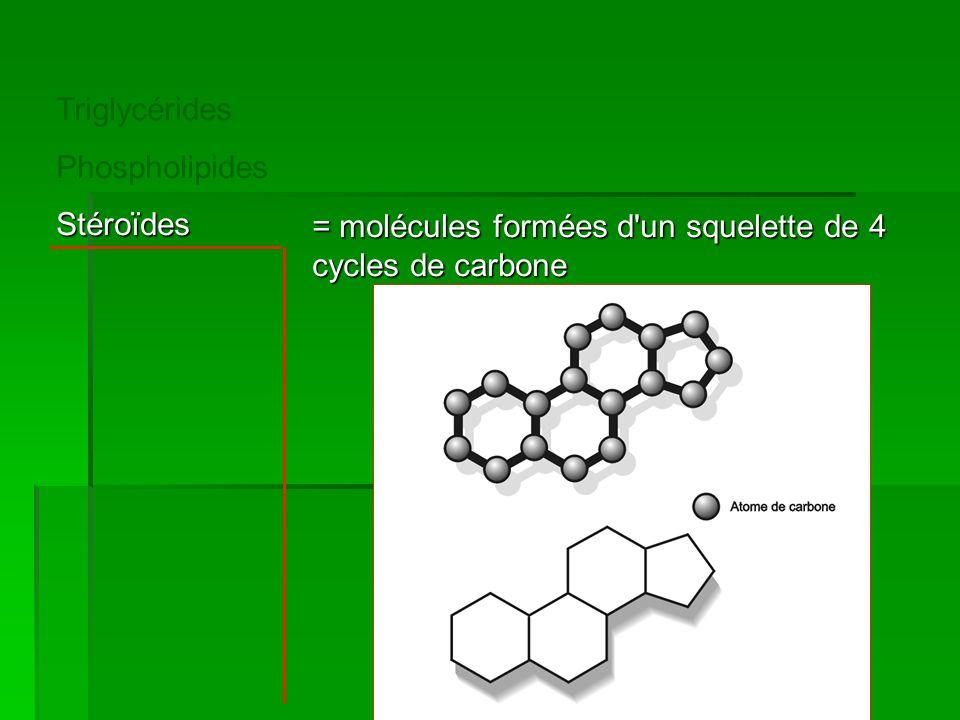 Triglycérides PhospholipidesStéroïdes = molécules formées d'un squelette de 4 cycles de carbone