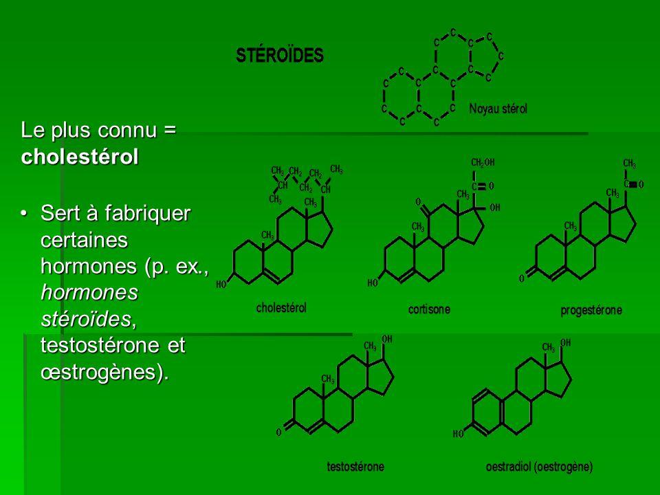 Le plus connu = cholestérol Sert à fabriquer certaines hormones (p. ex., hormones stéroïdes, testostérone et œstrogènes).Sert à fabriquer certaines ho
