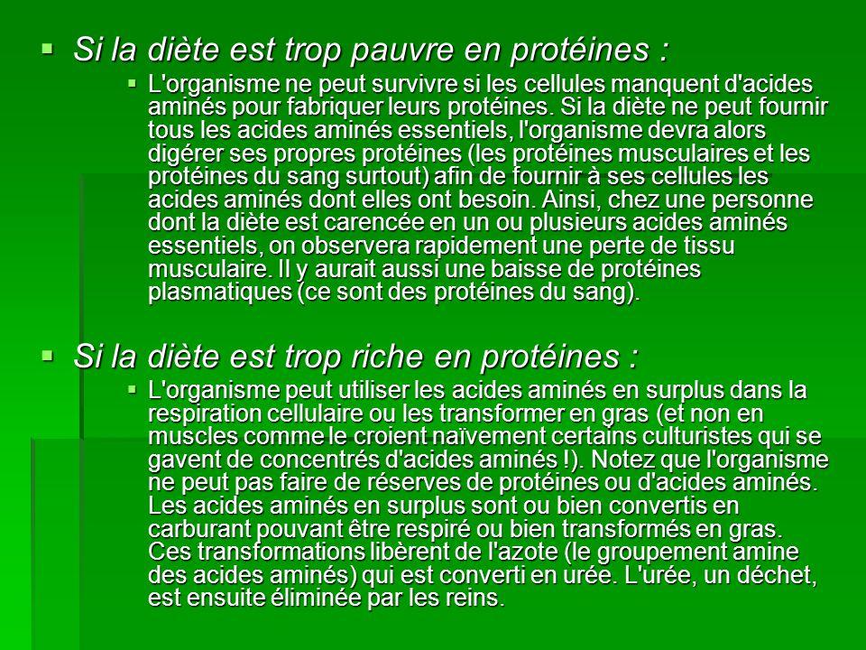  Si la diète est trop pauvre en protéines :  L'organisme ne peut survivre si les cellules manquent d'acides aminés pour fabriquer leurs protéines. S