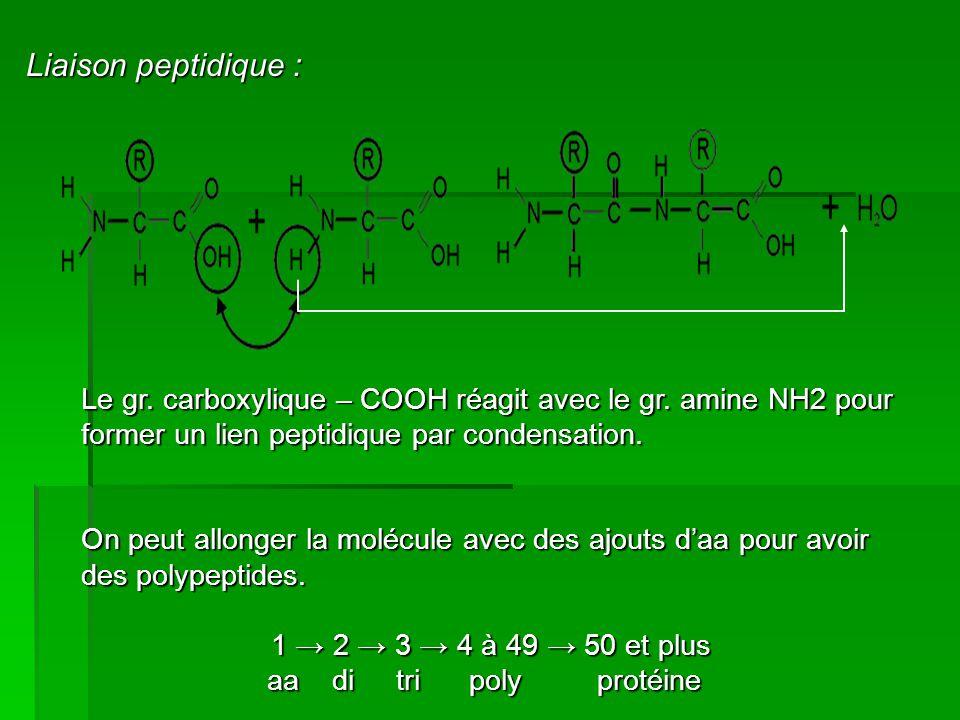 Liaison peptidique : Le gr. carboxylique – COOH réagit avec le gr. amine NH2 pour former un lien peptidique par condensation. On peut allonger la molé