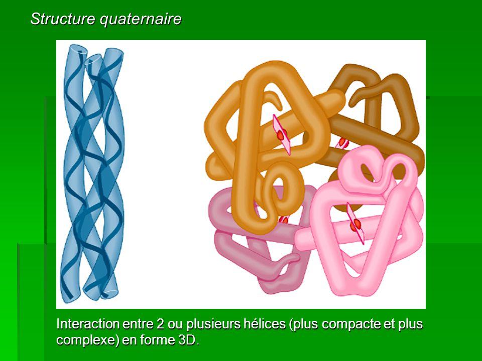 Interaction entre 2 ou plusieurs hélices (plus compacte et plus complexe) en forme 3D. Structure quaternaire
