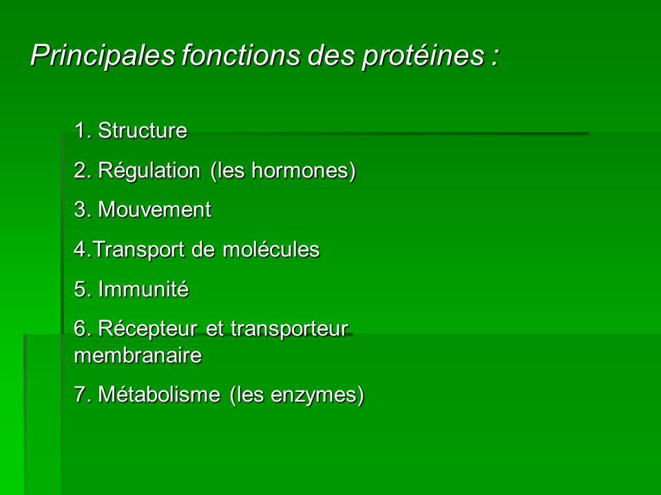 Principales fonctions des protéines : 1. Structure 2. Régulation (les hormones) 3. Mouvement 4.Transport de molécules 5. Immunité 6. Récepteur et tran