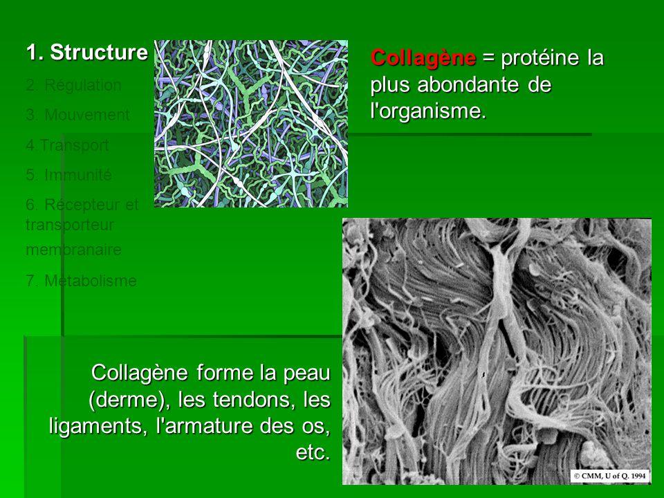 Collagène forme la peau (derme), les tendons, les ligaments, l'armature des os, etc. Collagène = protéine la plus abondante de l'organisme. 1. Structu
