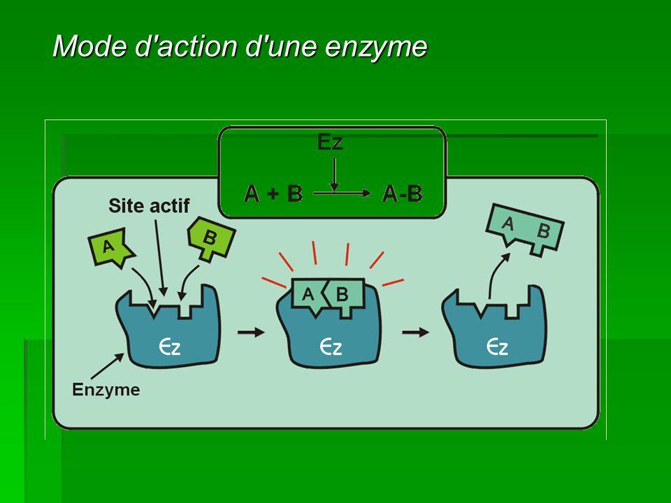 Mode d action d une enzyme