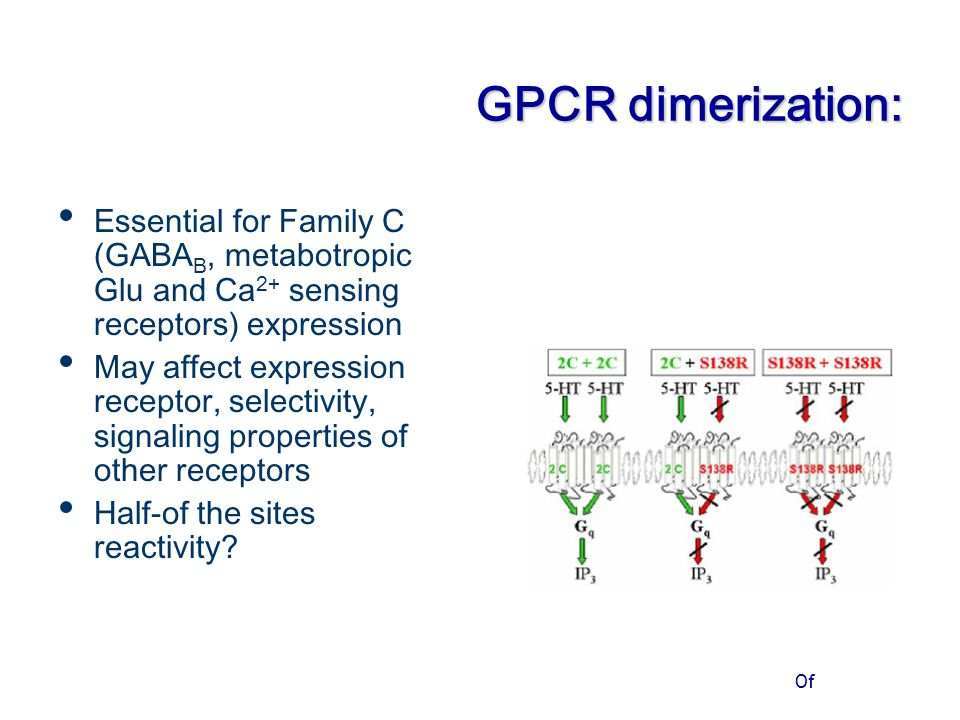 Of GPCR dimerization: Essential for Family C (GABA B, metabotropic Glu and Ca 2+ sensing receptors) expression May affect expression receptor, selecti