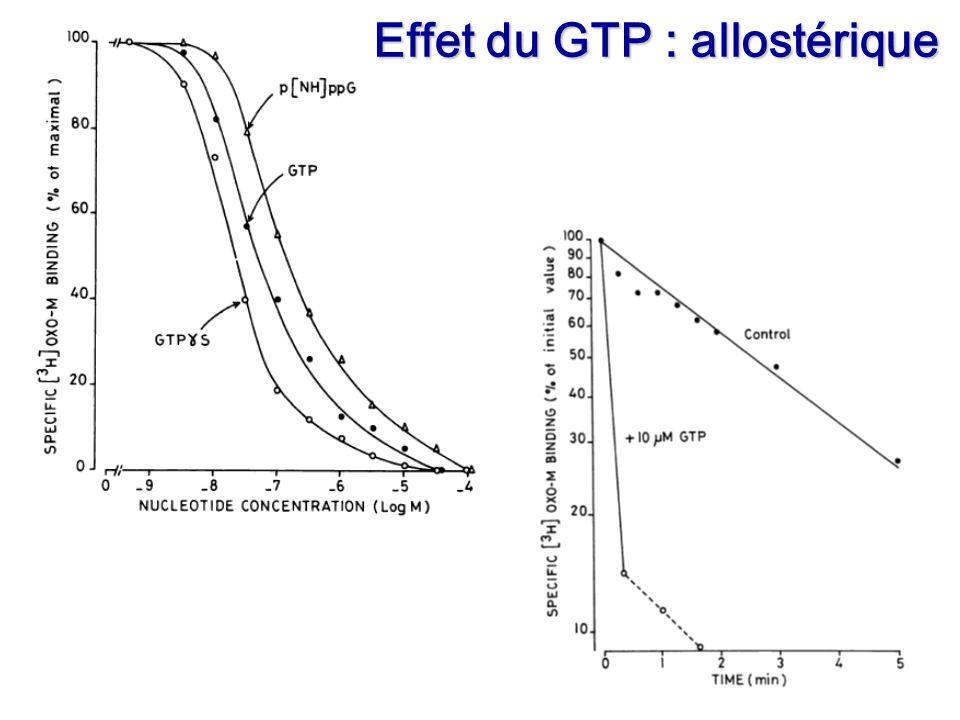 Of Effet du GTP : allostérique