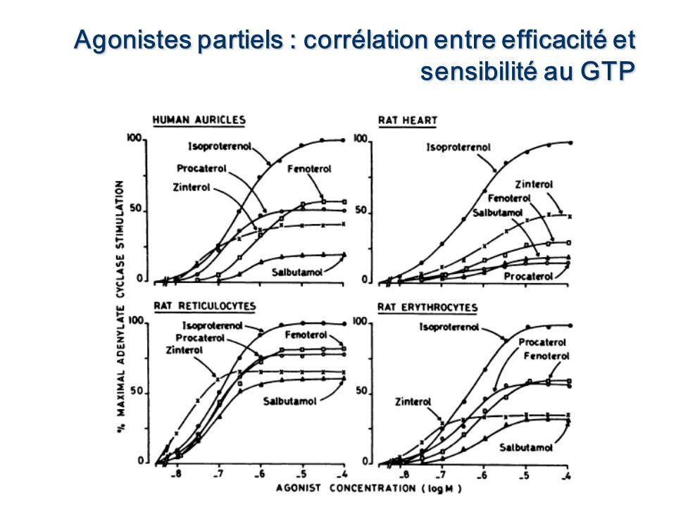 Of Agonistes partiels : corrélation entre efficacité et sensibilité au GTP