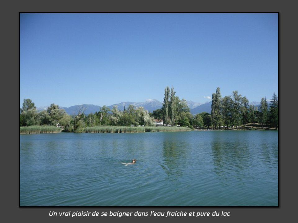 La vigne côtoie le lac et le sentier