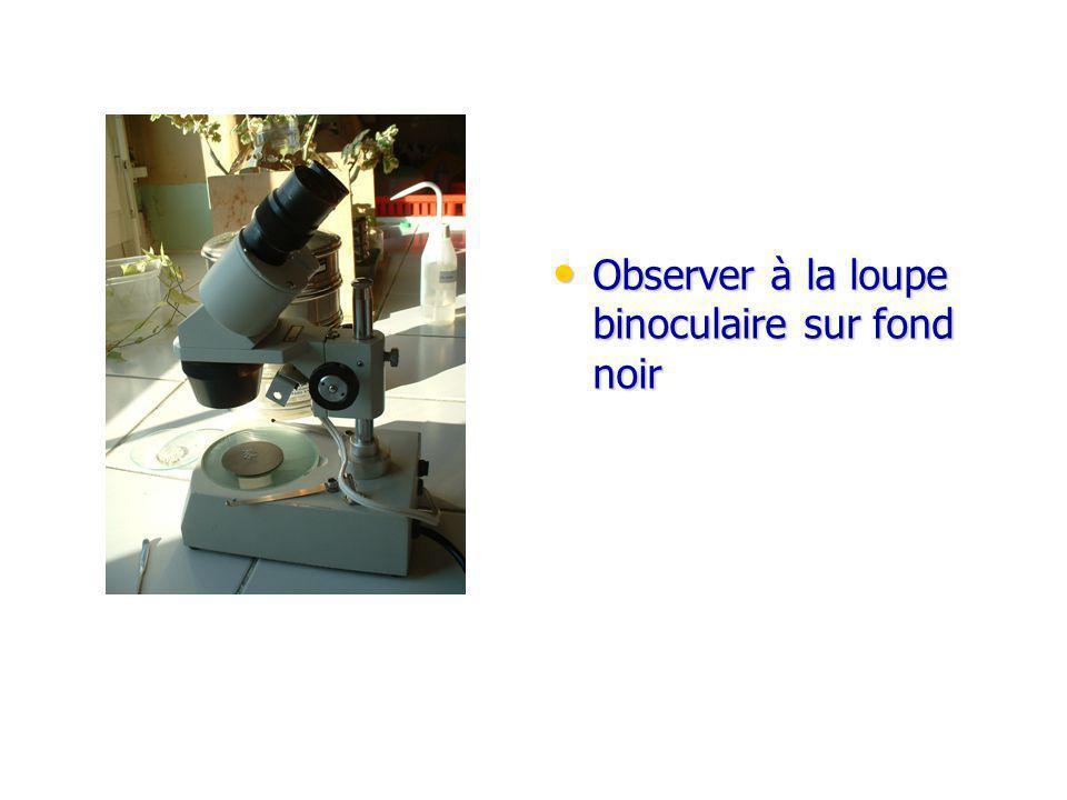 Observer à la loupe binoculaire sur fond noir Observer à la loupe binoculaire sur fond noir