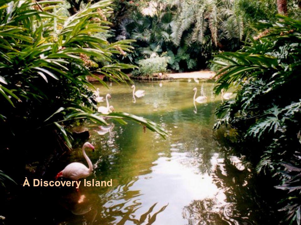 À Discovery Island