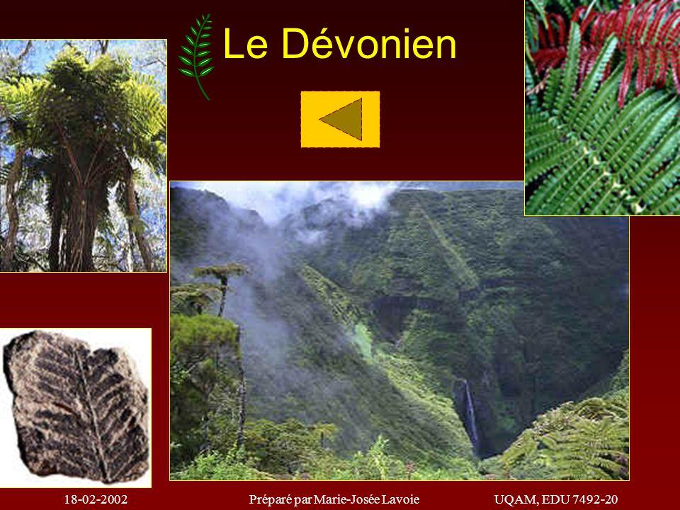 18-02-2002Préparé par Marie-Josée LavoieUQAM, EDU 7492-20 CONIFÈRES PLANTES À FLEURS