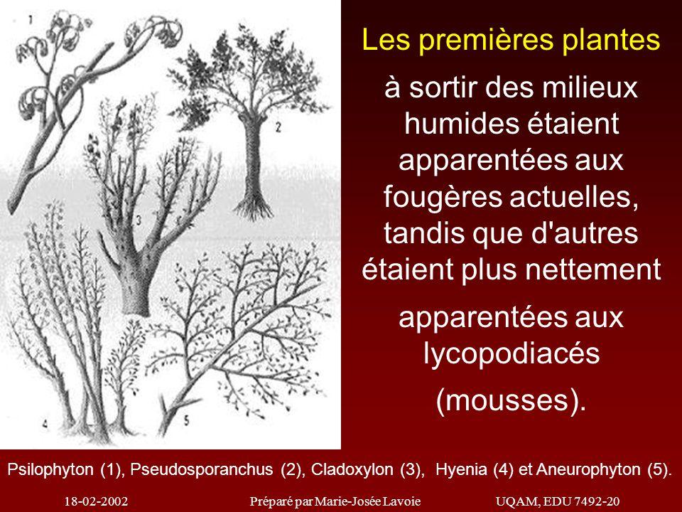 18-02-2002Préparé par Marie-Josée LavoieUQAM, EDU 7492-20 Psilophyton (1), Pseudosporanchus (2), Cladoxylon (3), Hyenia (4) et Aneurophyton (5).