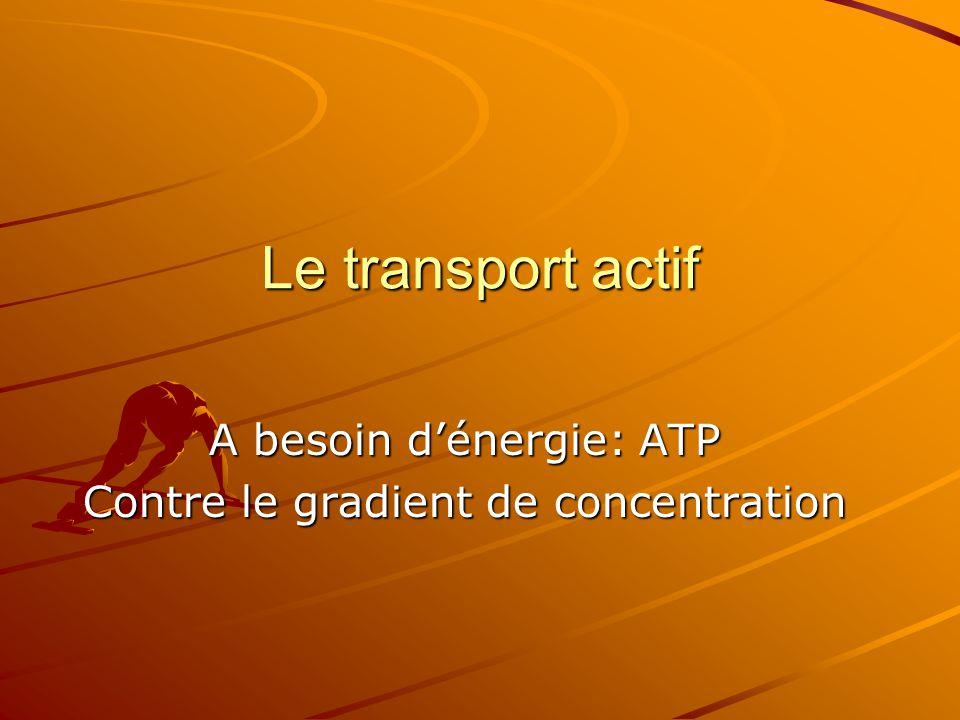Le transport actif A besoin d'énergie: ATP Contre le gradient de concentration