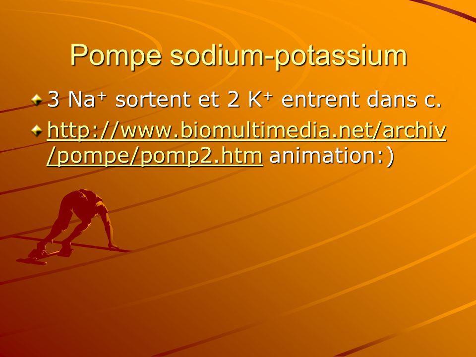 Pompe sodium-potassium 3 Na + sortent et 2 K + entrent dans c. http://www.biomultimedia.net/archiv /pompe/pomp2.htmhttp://www.biomultimedia.net/archiv