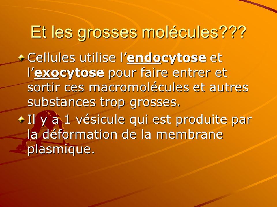 Et les grosses molécules??? Cellules utilise l'endocytose et l'exocytose pour faire entrer et sortir ces macromolécules et autres substances trop gros